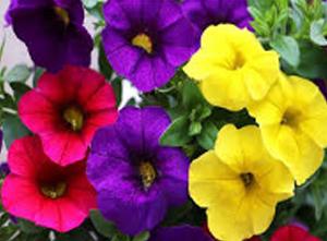 spring_9