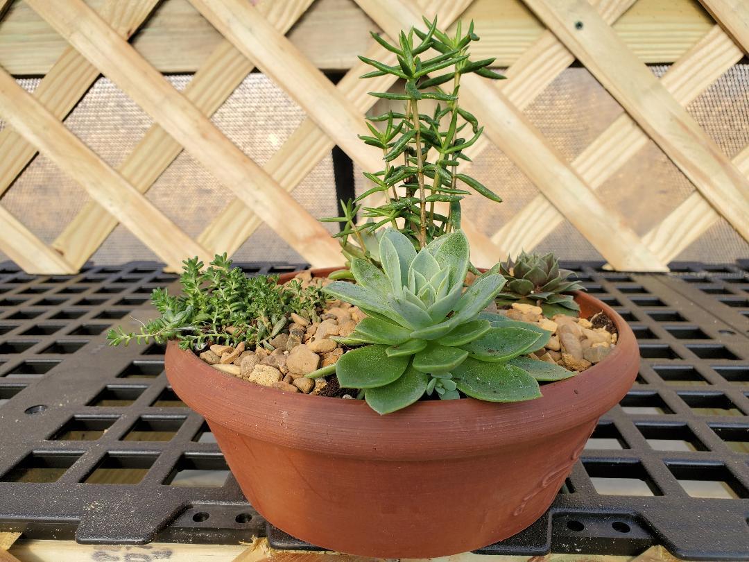 succulent plastic bowl